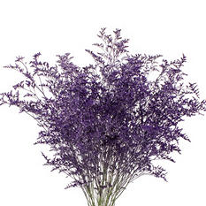 Limonium, Tinted Purple with Glitter (15 bunches)