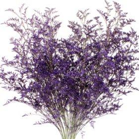 Limonium, Tinted Purple (15 bunches)