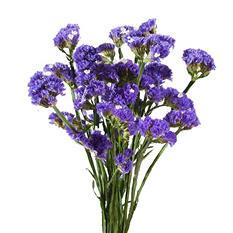 Statice, Purple (200 stems)