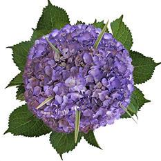 Hydrangea Bouquet V - Painted Lavender (8 pk.)