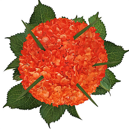 Hydrangea Bouquet - Painted Orange (8 pk.)