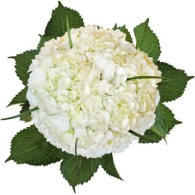 Hydrangea Bouquet with Lily Grass and Petals, White (8 bouquets and 2,000 petals)