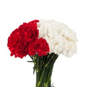 Carnations, White and Red Combo (200 stems)