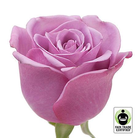 Fair Trade Roses, Lavender (75 stems)