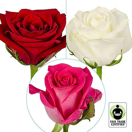 Fair Trade Roses, Assorted Colors (75 stems)