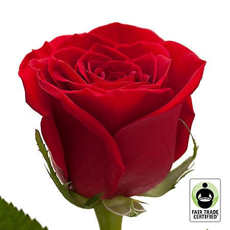 Fair Trade Roses, Red (75 stems)