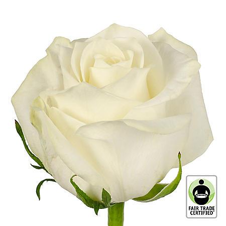 Fair Trade Roses, White (75 stems)