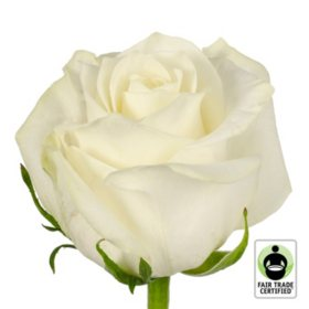 Fair Trade Roses, White (75 stems)