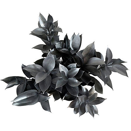PAINTED RUSCUS SILVER 50 STEMS