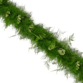 Garland, Plumosus with Variegated Pittosporum (25 ft)