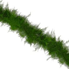 Garland, Plumosus (25 ft.)