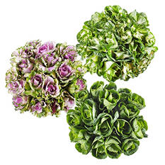 Ornamental Kale, Assorted Colors (30 stems)