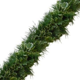 Garland, Tree Fern and Variegated Pittosporum (Choose 10, 25 or 75 ft.)