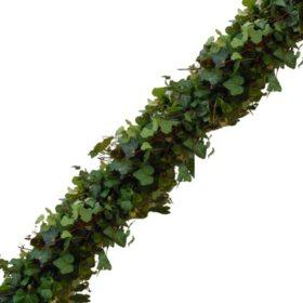 Garland, Green Ivy (Choose 10, 25 or 75 ft.)