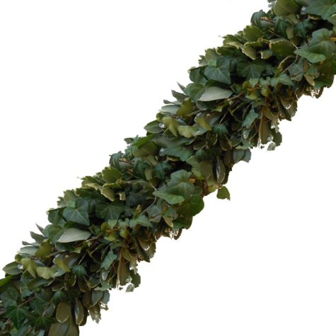 Garland - Variegated Pittosporum and Green Ivy (Choose 10, 25 or 75 ft.)