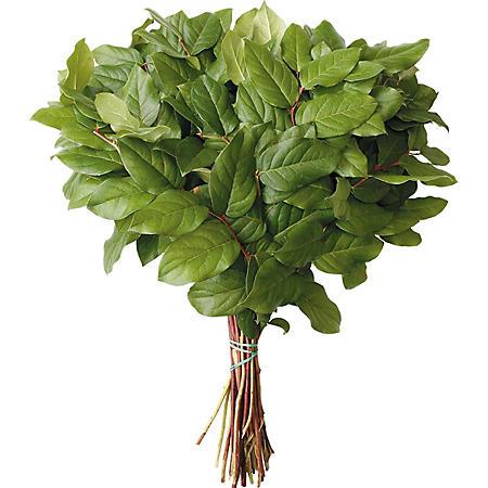 Salal Evergreen Floral Filler (Choose 10 or 20 bunches)