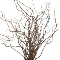 Curly Willow Branches (150 stems)