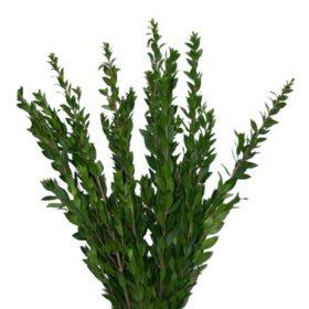 Myrtle Greenery (100 stems)