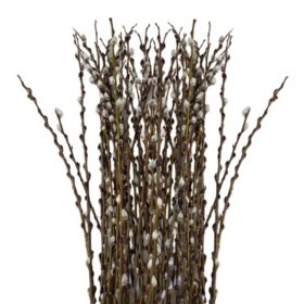 Pussy Willow (150 stems)