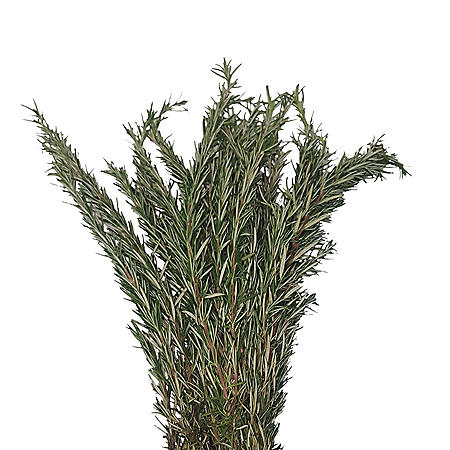 Rosemary (100 stems)