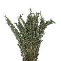 Rosemary (100 stems)