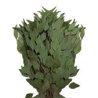 Diamond Silver Dollar Eucalyptus (40 stems)