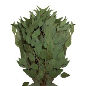 Diamond Silver Dollar Eucalyptus (40 stems)
