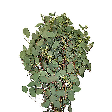 Seeded Eucalyptus Greenery (40 stems)