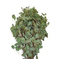 Seeded Eucalyptus Greenery (40 stems)