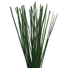 Horsetail Greenery (200 stems)
