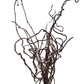 Kiwi Vine (25 stems)