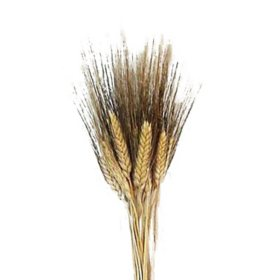 Dried Wheat Floral Filler (20 stems per bunch, 15 bunches)