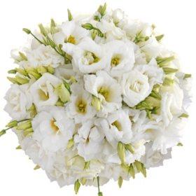 Lisianthus, White (80 stems)