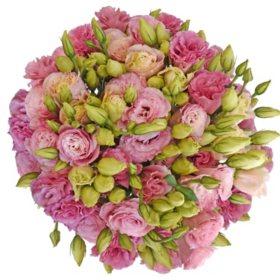 Lisianthus, Pink (80 stems)