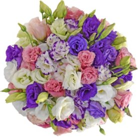 Lisianthus, Assorted Colors (80 stems)