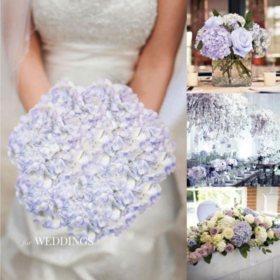 Hydrangeas, Lilac (20 Stems)
