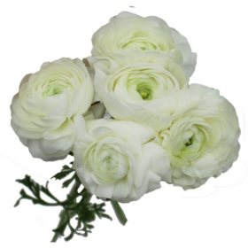 Ranunculus, White (60 stems)