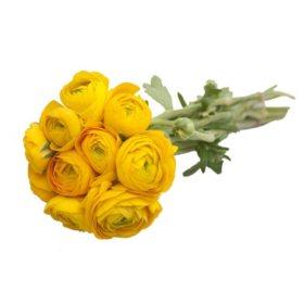 Ranunculous, Yellow (60 Stems)