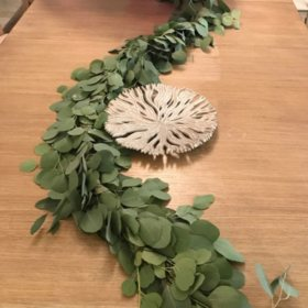 Garland, Silver Dollar Eucalyptus (Choose 10 or 25 ft.)