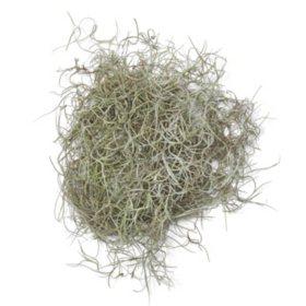 Spanish Moss (10-lb. box)