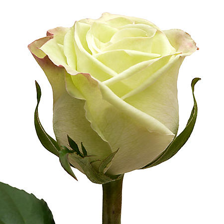 Roses, Green Tea (choose 50 or 100 stems)