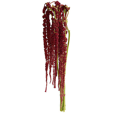 Designer Hanging Amaranthus, Red (60 stems)