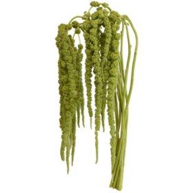 Designer Hanging Amaranthus, Green (60 stems)