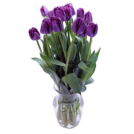 Fresh Cut Tulips, Purple (choose 40 or 90 stems)