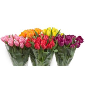 Fresh Cut Tulips, Assorted Colors (Choose 40 or 90 stems)