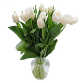 Fresh Cut Tulips, White (choose 40 or 90 stems)