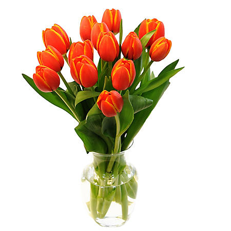 Fresh Cut Tulips, Orange (Choose 40 or 90 stems)