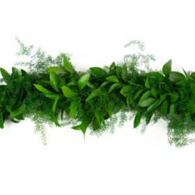 Israeli Ruscus and Star Asparagus Garland (Choose 10 or 25 feet)