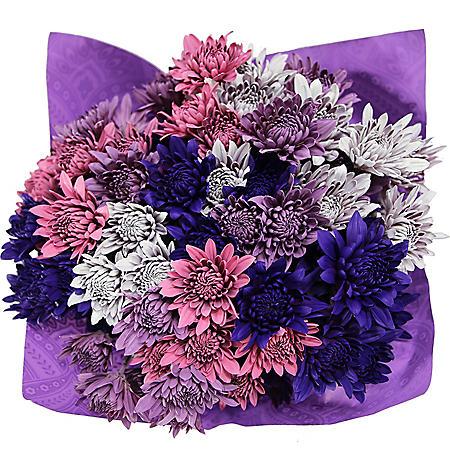 Purple Dazzle Poms (8 bunches)