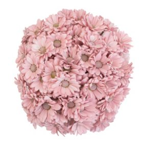Painted Poms, Rose Quartz (60 stems)